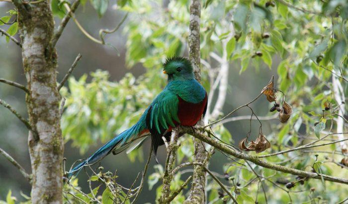 Divoká příroda Kostariky – FOTOEXPEDICE s Koktejlem